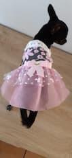 robe avec dentelle pour petit chien