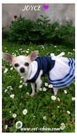 robe marinière pour chihuahua