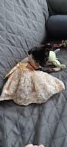 robe de mariage et bapteme pour petit chien