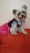robe tutu rose pour petit chien