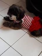 maillot rayé avec jupon pour chien