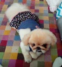 robe jupon à pois en jean pour chien