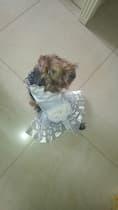 robe de mariée pour petit chien