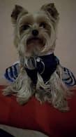 robe chic été pour petit chien