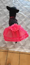 robe rose pour chienne