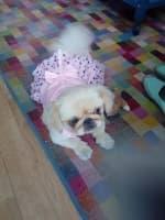 robe rose étoilée pour petit chien