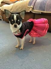 chien habillé en robe rose à strass
