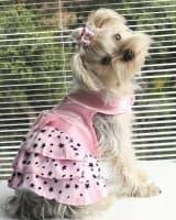 tenue été pour petit chien