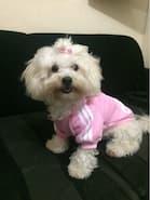 petit chien habillé en adidog