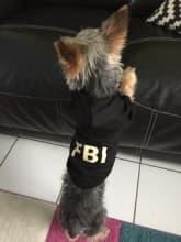 sweat noir inscription fbi pour petit chien