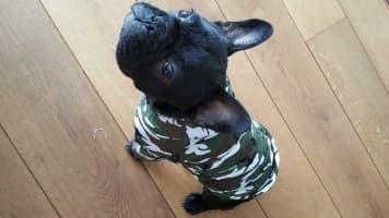 pull à capuche camouflage pour chien