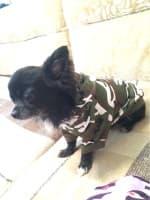 pull camouflage pour petit chien