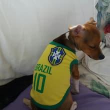 tenue de foot du brésil pour chien