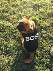 maillot boss pour petit chien