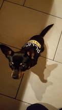 maillot imprimé pour chien