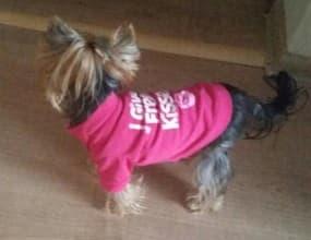 maillot free kisses pour chienne