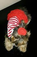 maillot avec froufrou pour chien