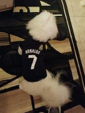 maillot joueur ronaldo pour chien