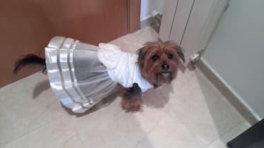 robe de cérémonie blanche pour femelle