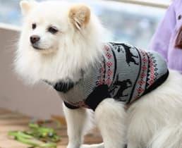 pull chaud pour petit chien