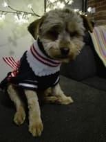 pull col roulé pour petit chien