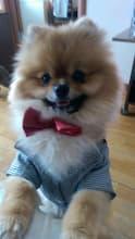 veste de costume pour chien