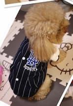 veste sport à rayure pour chien