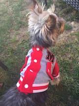 veste sport rouge pour chien