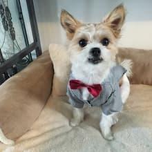 veste élégante pour chien