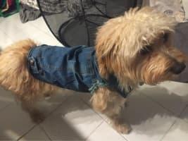 chien qui porte une veste en jean