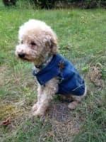veste denim délavée pour chien