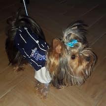 vêtement baseball pour chien