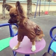 look cuir pour chien