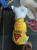 imper jaune pour petit chien