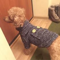 pull-over en laine pour caniche