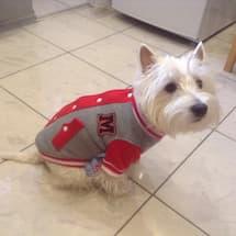veste de baseball pour chien
