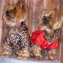 manteau imprimé léopard pour chien
