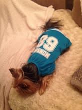 tenue sportive pour chien
