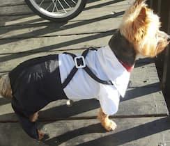 costume chemise pour chien
