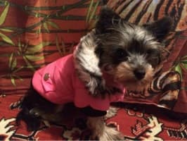 manteau rembourré pour petit chien
