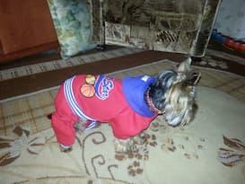 vêtement de sport pour chien