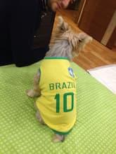 maillot de football pour chien