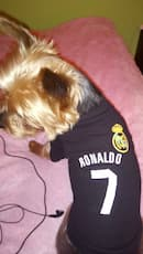 tee-shirt noir de football pour chien