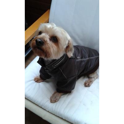 Manteau mode pour chien