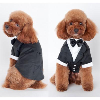 costume soirée pour petit chien