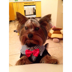 Bijou pendentif avec ADRESSE pour chien