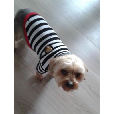 maillot à rayures pour chien