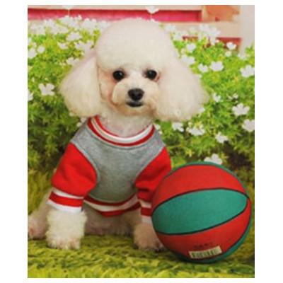 Caniche en habit de sport