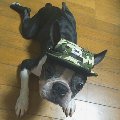 chapeau pour chien