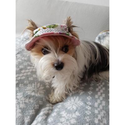 protection soleil pour chien